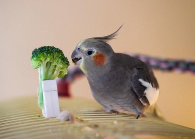 bird food requirements
