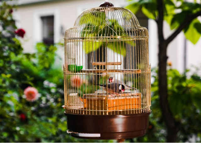 best shape and style of bird cages