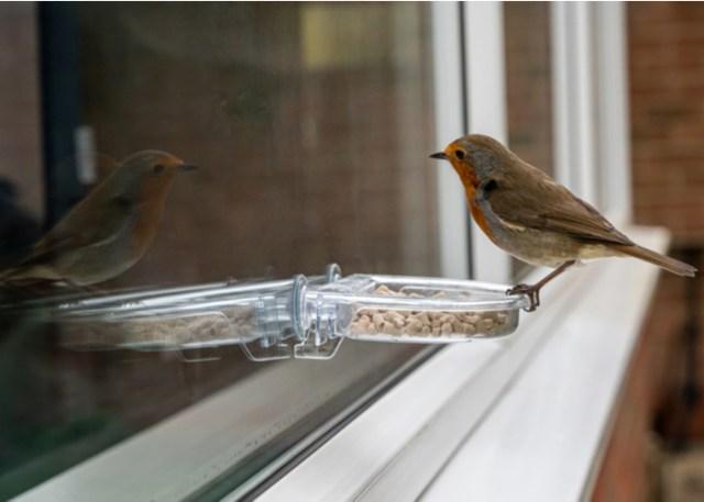 best pet bird feed