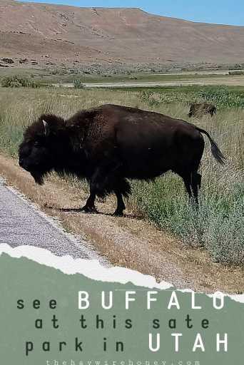 Play on Antelope Island, Utah