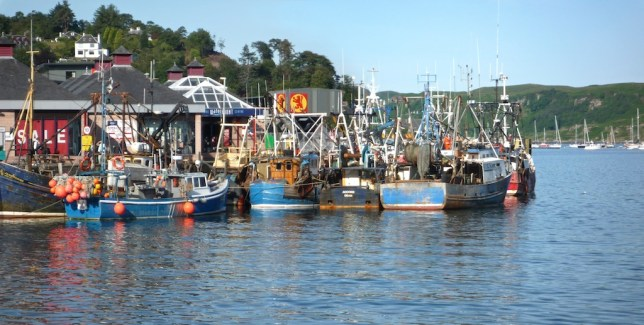 Oban fishing boats