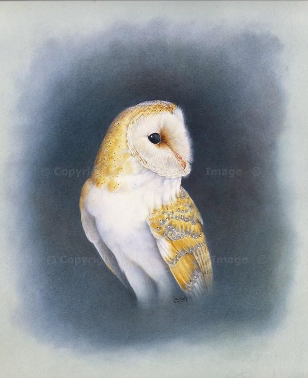 Barn Owl Head 13_ws