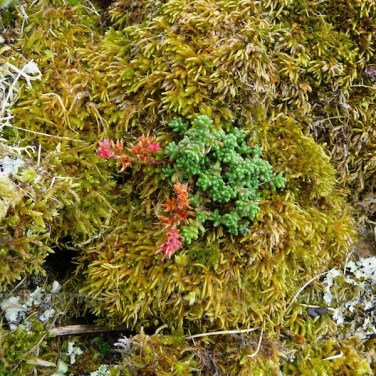 Garvellachs: A rock garden of moss, lichen and stonecrop