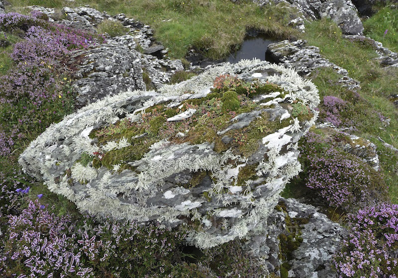 Garvellachs: Beautiful rock