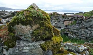 Garvellachs: Moss, stonecrop and lichen on ruins