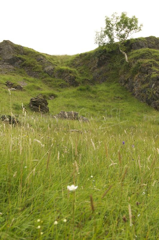 Low coastal hills and grassland of Lismore