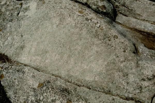 The faint boar carving
