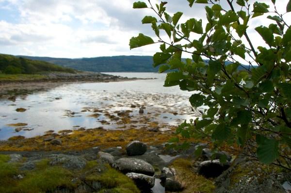 Alders by Loch Caolisport, Kintyre