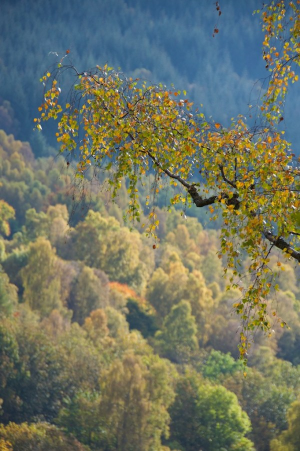 Killiecrankie Autumn