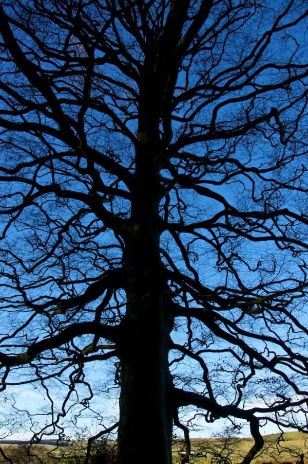 Beech trees, Autumn 3