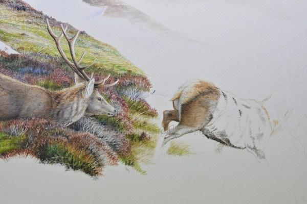 Deer Hillside unf 1-ws