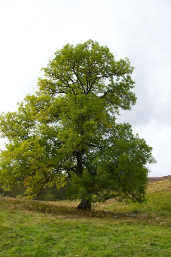 Ash, near Braemar