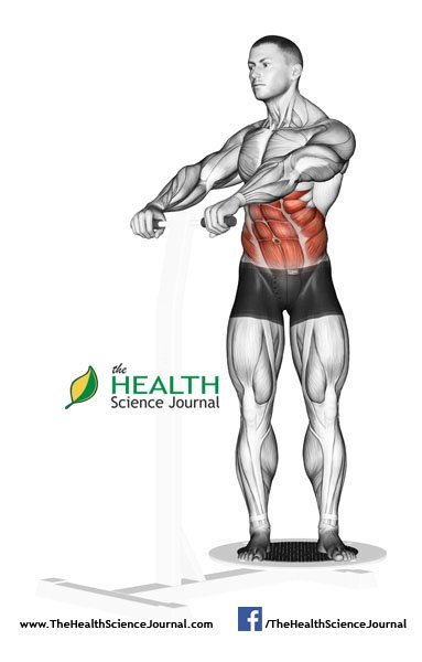 © Sasham   Dreamstime.com - Exercising for bodybuilding. The rotation of the trunk, standing on the simulator Twist