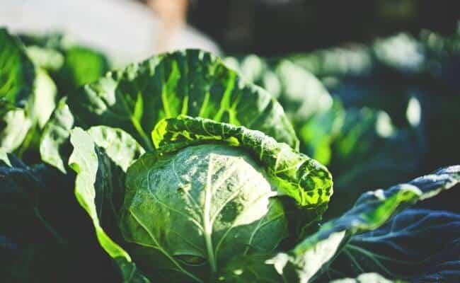 Best Fall Produce - Cruciferous Vegetables