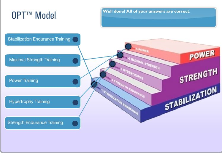 nasm opt five phases of training