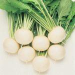 salad turnip