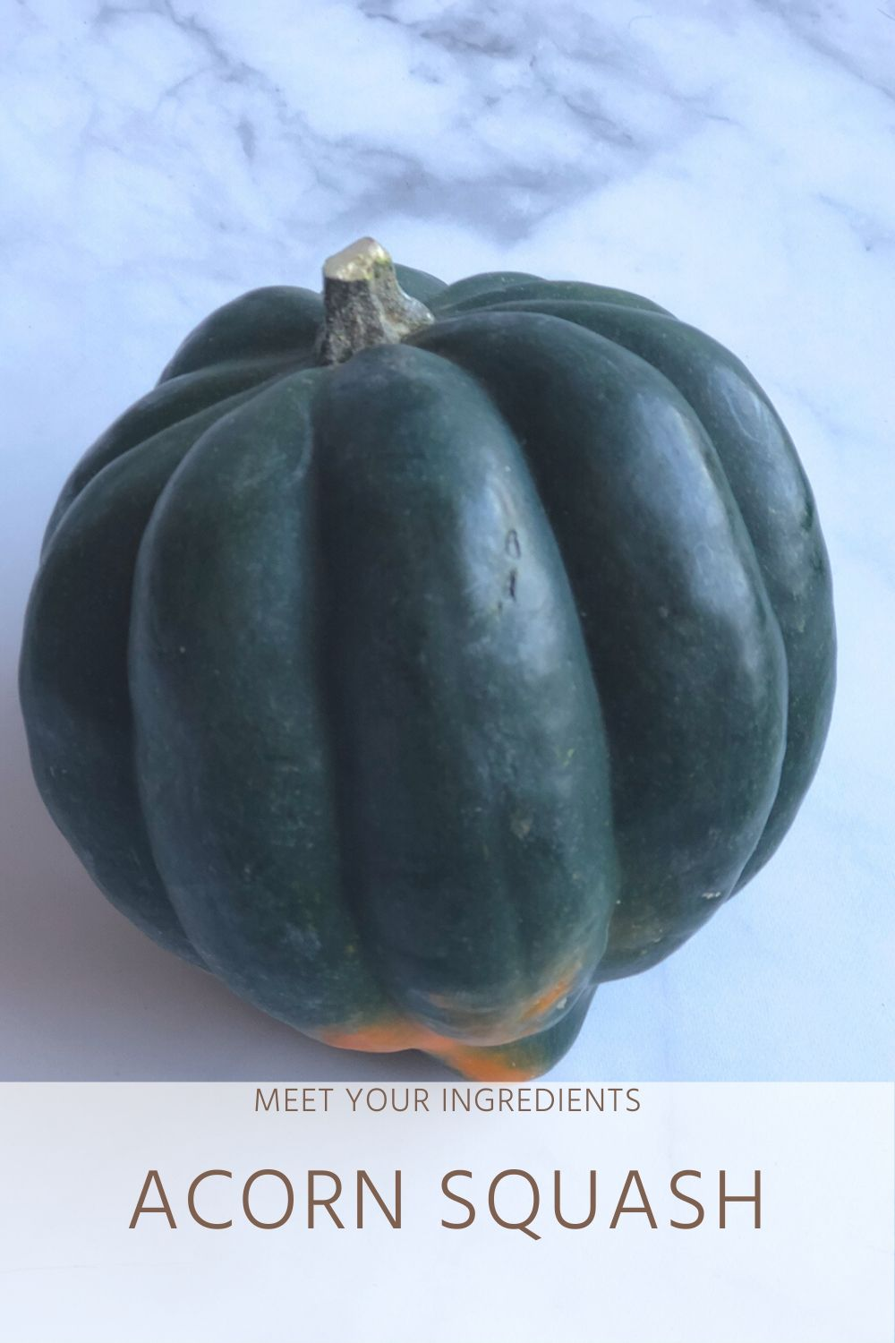 Dietitian Guide to Acorn Squash