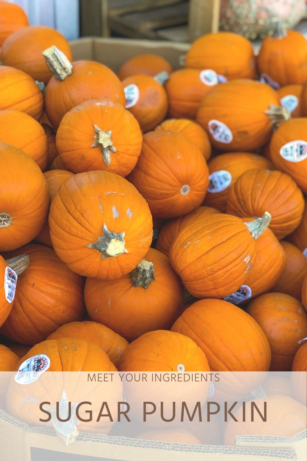 Dietitian Guide to Sugar Pumpkins