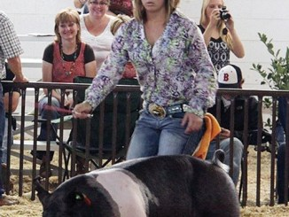 Taylor Morris was fourth in the Market Hog Crossbred division and also placed fifth in the Hampshire division.