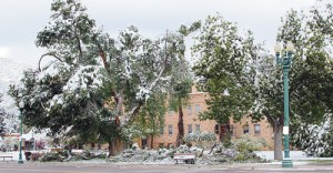 An early October snow storm caused heavy tree damage around Rio Blanco County.