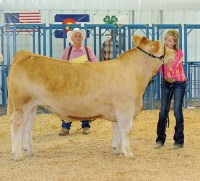 Anna Walsh – Meeker Reserve Champion Beef Sold for $3,250 – White River Electric