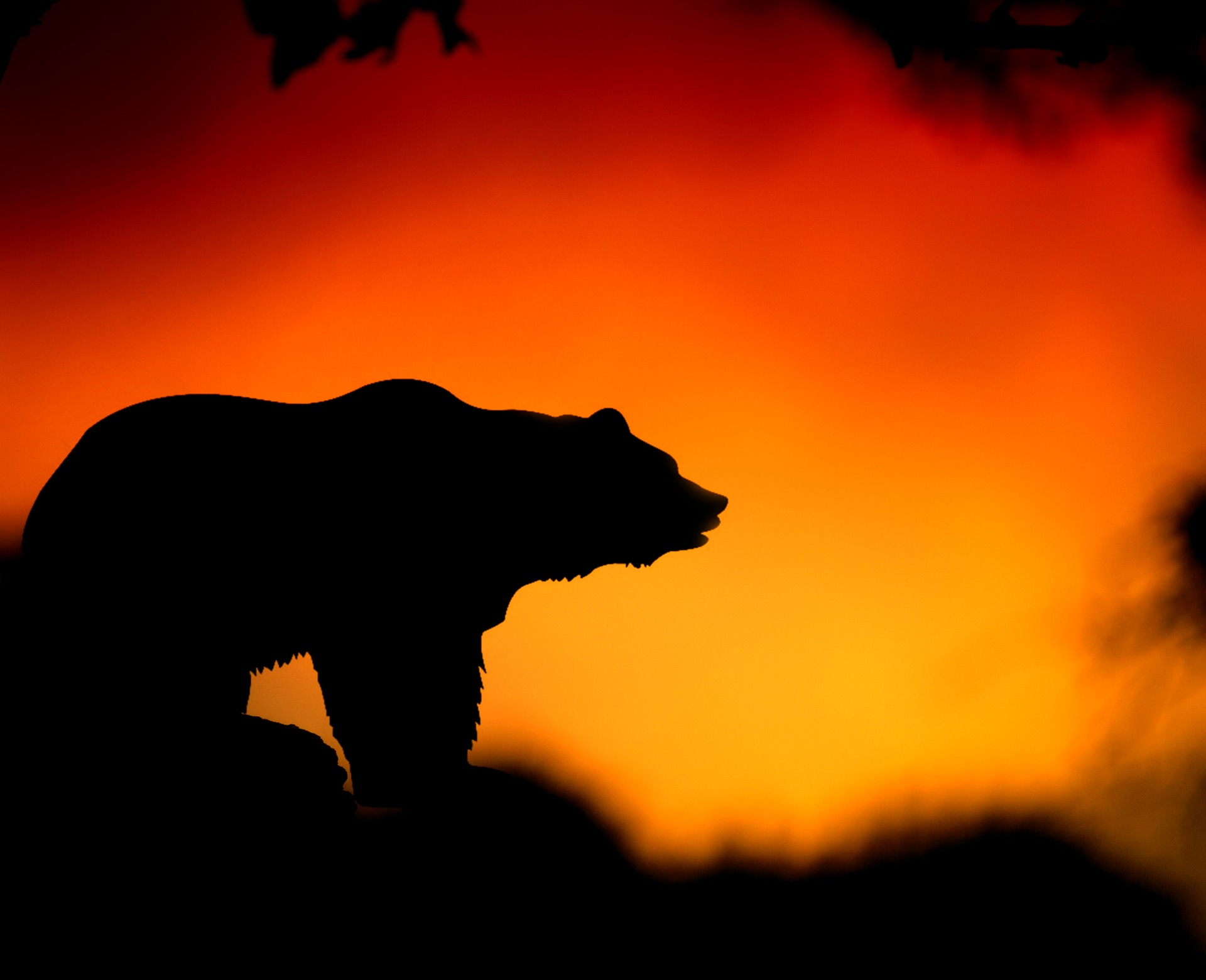 bear predation