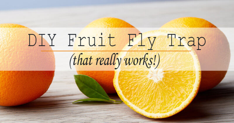 How To Make The Best Fruit Fly Trap The Herbal Spoon