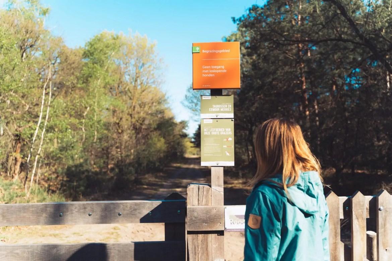 Wandelen in de Maashorst