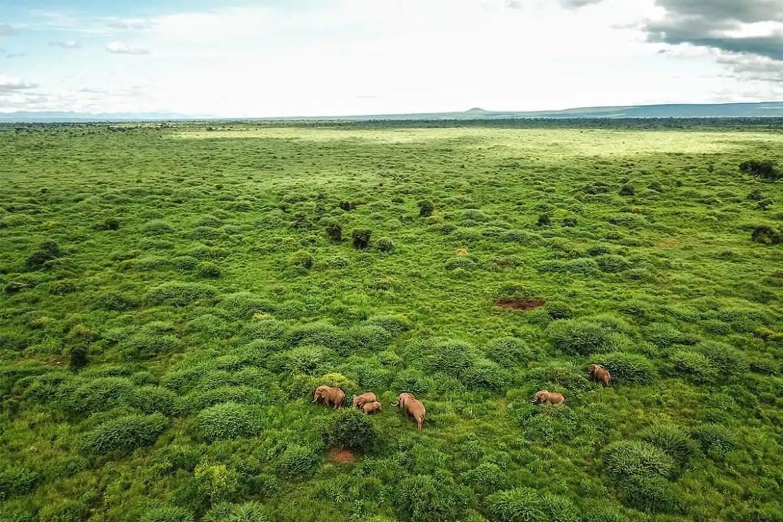 Kenia National Park