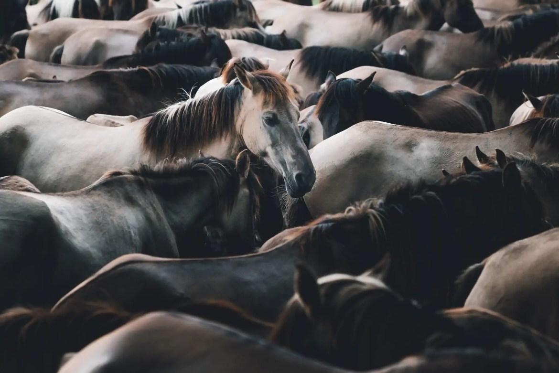 Nordrhein Westfalen wilde paarden