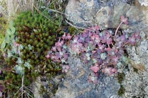 sedum, sugarloaf mountain, hiking with kids