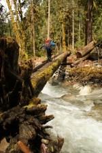 log bridge forest nature kids hiking