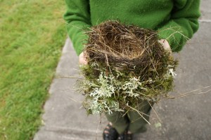bird nest robin nature kids