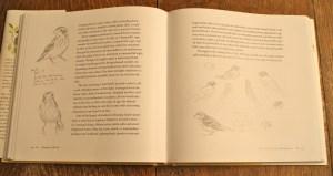 wlidlife art, bird drawings, julie zickefoose, wildlife rehabilitation