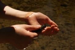 rough-skinned newt, washington amphibian, Boardman lake, kids in nature