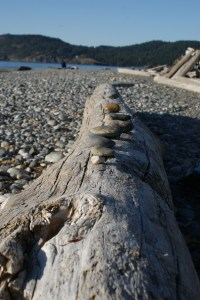 west beach, deception pass state park, rocks