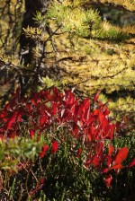 fall colors, heather pass, north cascades hiking