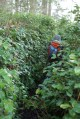 kids in nature, hiking with children, washington park, anacortes