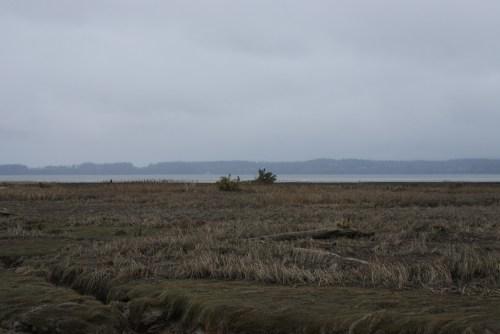 skagit flats, fir island, birding, winter raptors