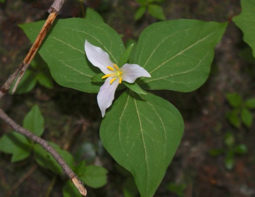 washington native wildflowers, lake easton state park