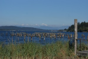 hiking anacortes, guemes channel, nature with children