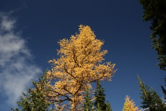 blue lake hike, north cascades, hiking with children, larches, fall color