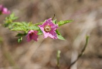mercer slough, spring flowers, native washington plants