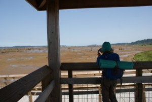 nisqually nwr, hiking with children, birding