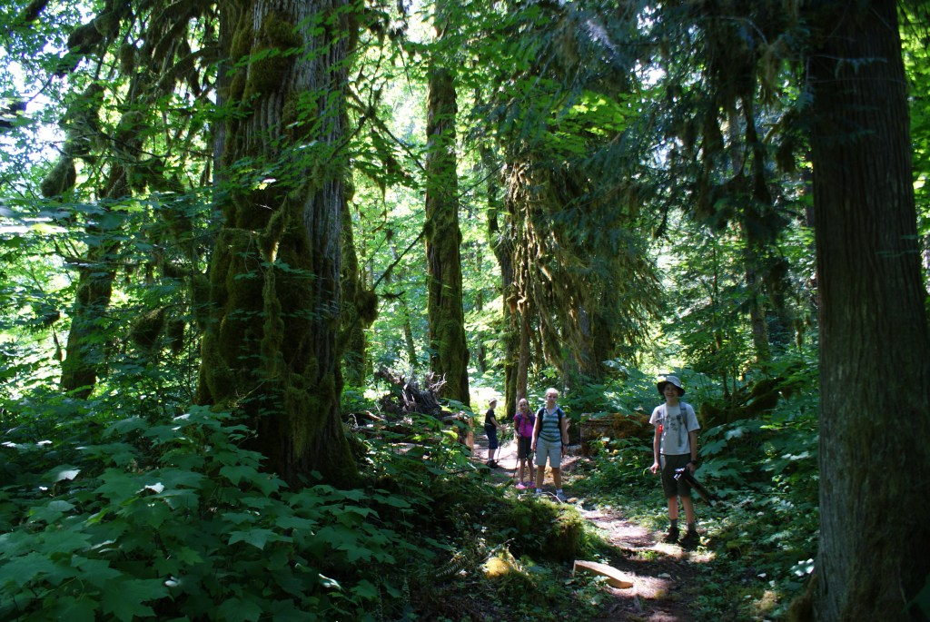 kids hiking, shady summer hikes