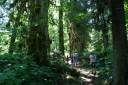 kids hiking, shady summer hikes