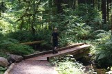 old sauk river, hiking with children, shady cool hikes