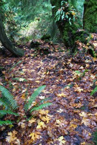 south whidbey state park, hiking with children, wilbert trail, fall hikes