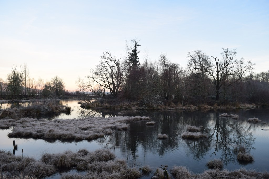 nisqually nwr, birding with children, winter birds