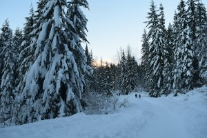 snowshoeing gold creek road, winter hikes with children